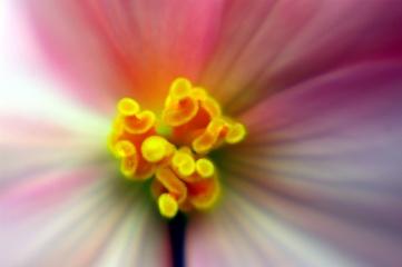 begonia-istd-lbo