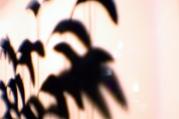 birds-on-wires-istd-original-lb